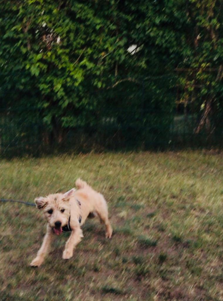 Damien spielt im Garten