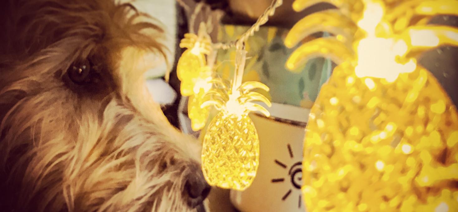 Damien im Auto mit der Ananas-Lichterkette