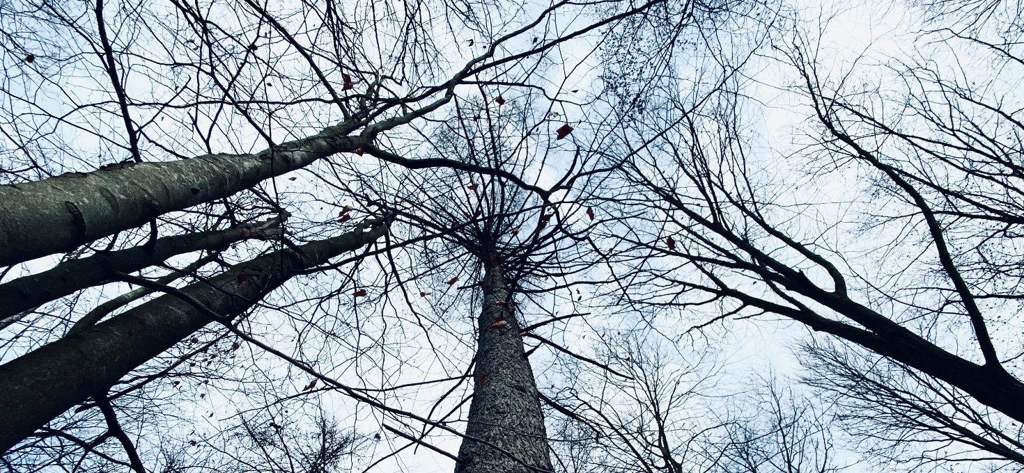 Blick in die Bäume